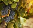 Rocketship wine co thumbnail